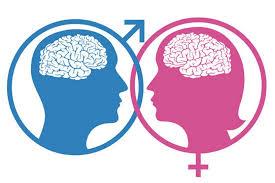 cervello_gender