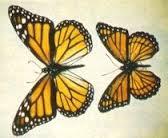 monarca e vicerè